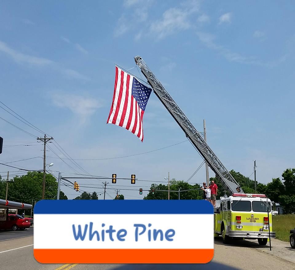 White Pine FD1